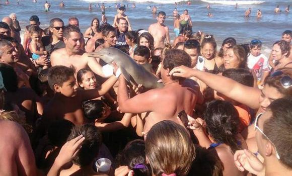 """Turistët mbysin delfinin duke bërë """"selfie"""""""