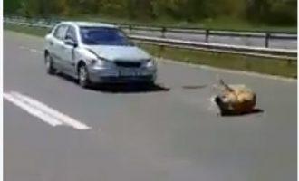 Shpejtësia në autostradën Tetovë-Shkup mbytë kafshët [Video]