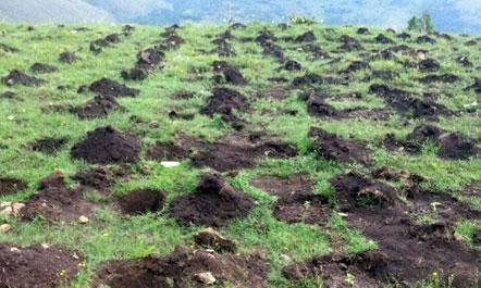 Qeveria e Shqipërisë me plan kundër kultivimit të kanabisit