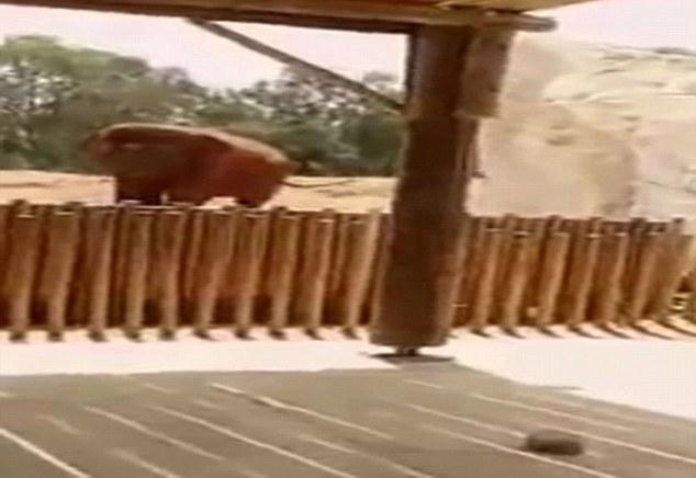 Një fëmijë vritet nga guri i hedhur nga një elefant në Marok