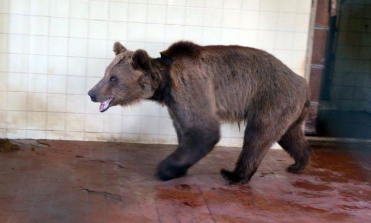 """Tre arinjtë e keqtrajtuar në Shqipëri gjejnë """"shtëpi"""" në Kosovë"""