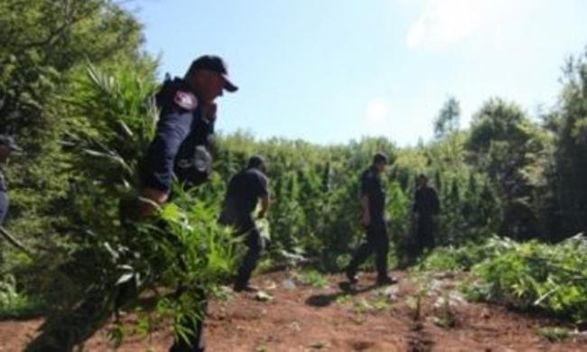 Shefi i komisariatit të policisë akuzohet për kultivim të lëndëve narkotike