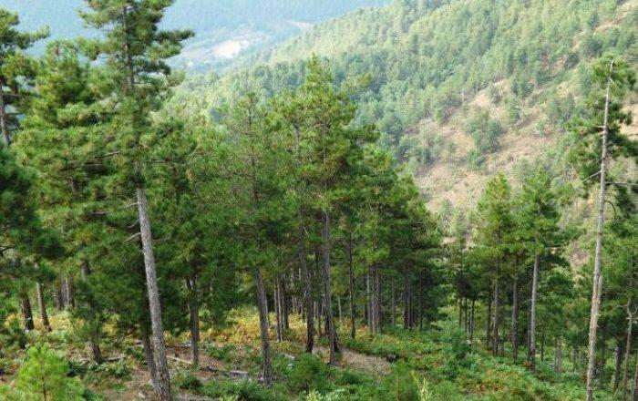 Pretendimet e Agjencisë Pyjore se Kosova humb 615 hektarë pyje
