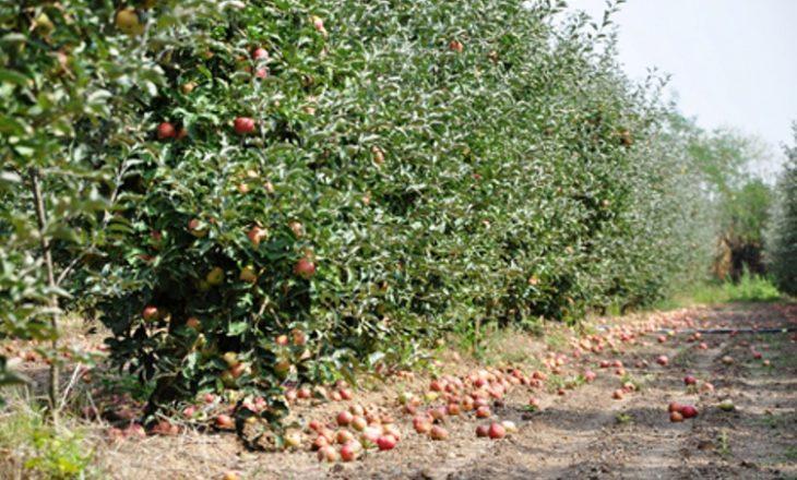 Në Mitrovicë një shqiptarit i digjen 1150 trupa molle