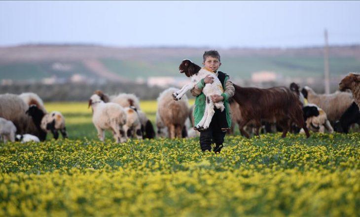 Rikthehet jeta në Al-Bab të Sirisë