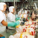 Shqipëria ia kthen mbrapsht 26 tonë mish pule Brazilit