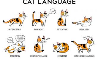 Gjuha e maceve: Cicëron për pronarët e maceve