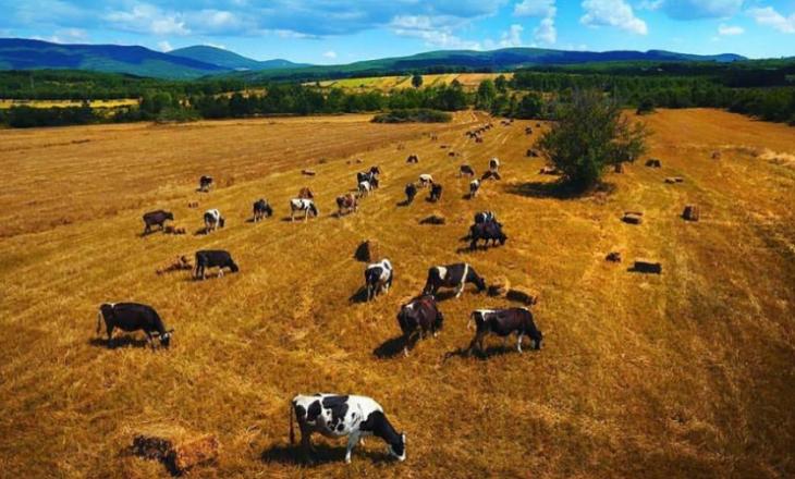 Për 15 vjet u privatizuan afro 30 mijë hektarë tokë