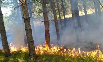 Eskalon zjarri në Librazhd – kërkohet ndërhyrje nga ajri