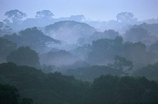 Pemët në Amazonë që e prodhojnë vetë shiun