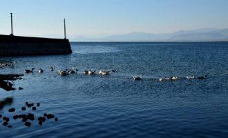 Në liqenin e Shkodrës mbyten dy fëmijë