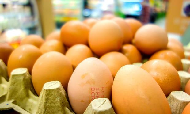15 shtete evropiane të prekura nga skandali i vezëve