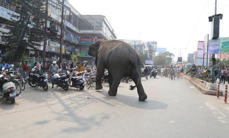 Elefanti mbyt 14 persona