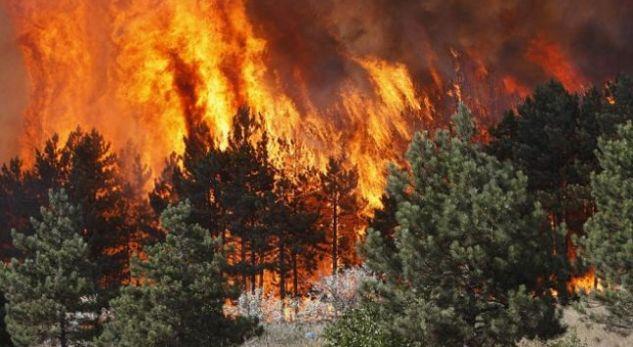Gjenerali grek akuzon shqiptarët për zjarrvënie të qëllimshme