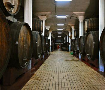 Prodhimtaria e rrushit dhe e verës, sektorë strategjikë të Kosovës