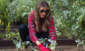 Melania punon bahçen me një këmishë me çmim marramendës
