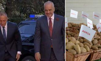 Për kryeministrat që i harruan prapë patatet