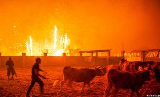 Zi në Portugali për viktimat e zjarreve