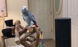 Papagalli zbulon gabimet e teknologjisë më të fundit