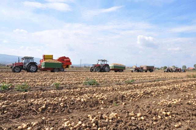 Investitorët nga Izraeli të gatshëm të investojnë mbi 100 milionë euro në bujqësi