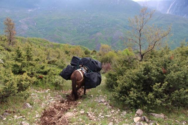 Rikthehet transporti me mushk, drogë drejt Malit të Zi