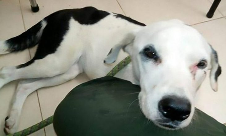 """Qeni """"ngordh nga dashuria"""" për pronarin që e braktisi në aeroport"""