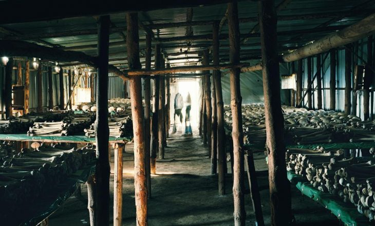 Foto të frikshme të turizmit të errët nëpër botë
