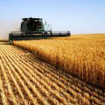 Kosova ka kapacitet të prodhojë miell për pesë milionë banorë