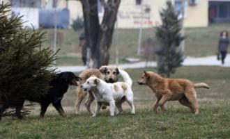 Policia parandalon mbajtjen e garës së qenve në Shtërpcë