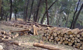 Vlera e dëmit nga prerja pa leje e drunjve
