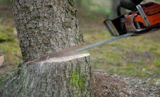 E bën për spital rojtarin e pyllit – lirohet i dyshuari