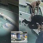 VIDEO: Tmerr në pishinë, 12-vjeçari bllokohet për 9 minuta nën ujë
