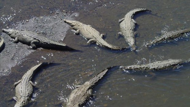 Hynë në fermë dhe i masakruar 300 krokodilë   për gjakmarrje