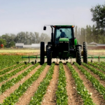 Janë proceduar për pagesë subvencionet për 18,062 fermerë