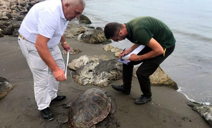 """Breshka që """"refuzon"""" të largohet nga Shqipëria"""