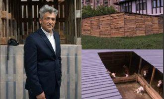 8 lopë Kosove të mbyllura për 1 muaj në emër të artit, plus 40 mijë euro shpenzime nga shteti