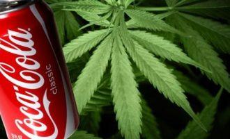 Coca-Cola fillon bisedimet për të prodhuar pije me kanabis