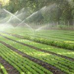 Tkurret toka bujqësore, krijohen zona industriale dhe urbane